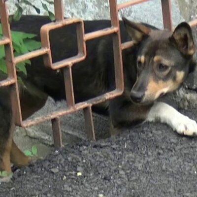 В Челябинской области участились случаи нападения бездомных собак на людей