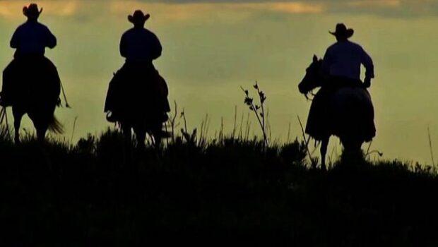 Генетические эксперименты фермера из Техаса ломают стереотипы о ковбоях даже в самой Америке