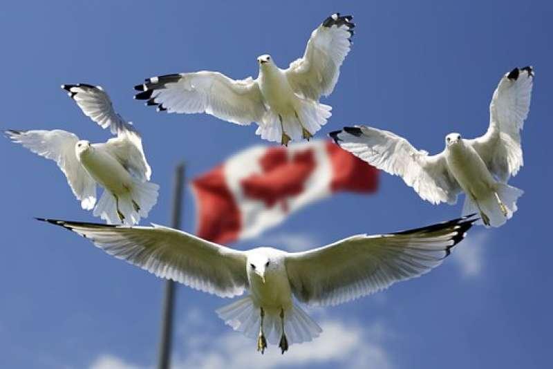 Россия ввела ответные санкции в отношении канадских граждан