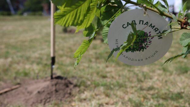 В память о павших высадили более 31 млн деревьев